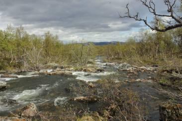 Wilde Flüsse