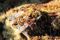 Flechten und Moose besiedeln die Felsoberfläche | © Christine Riel