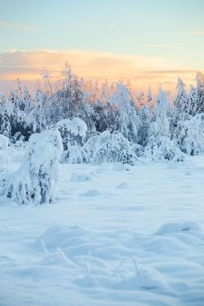 Schneebäume | © Johannes Hansen