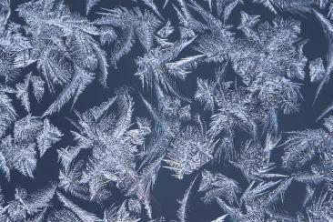Farnwedel im Eis   © Johannes Hansen